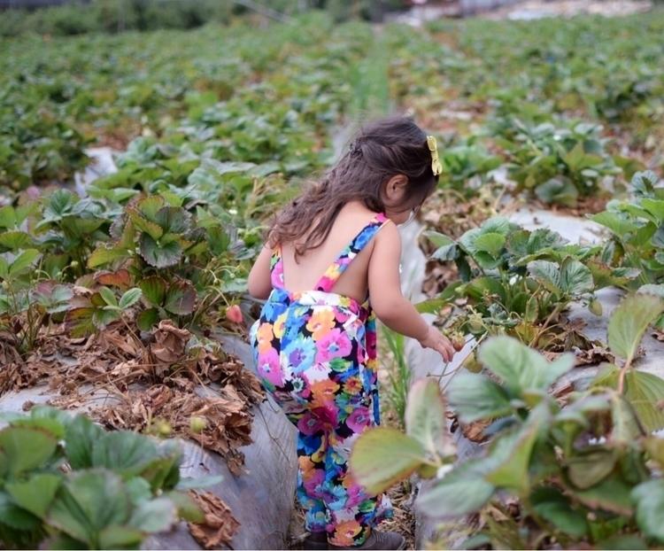 Strawberry picking Underwood Fa - snippets_of_v | ello