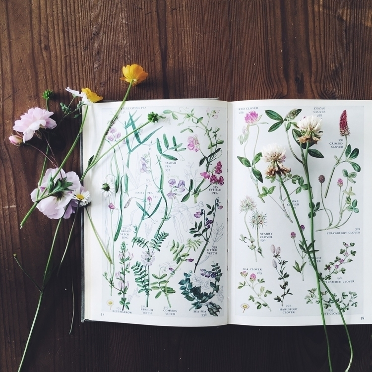 Flowers books - floral, flowers - beckyocole | ello