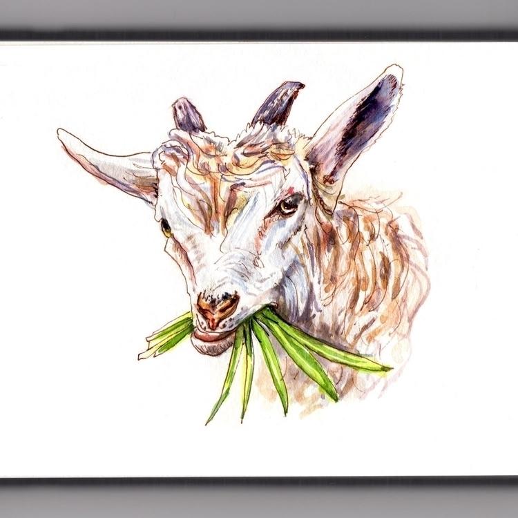 Goat Eating Grass - watercolor, watercolour - doodlewash | ello
