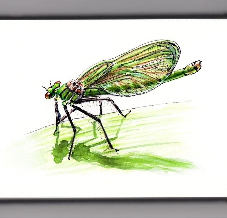 Dragonfly Leaf - watercolor, watercolour - doodlewash | ello