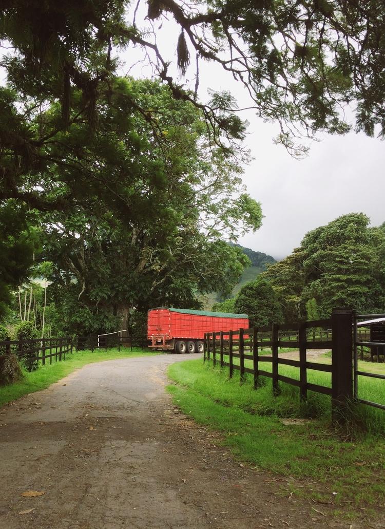 nature, trees, road - todovisual | ello