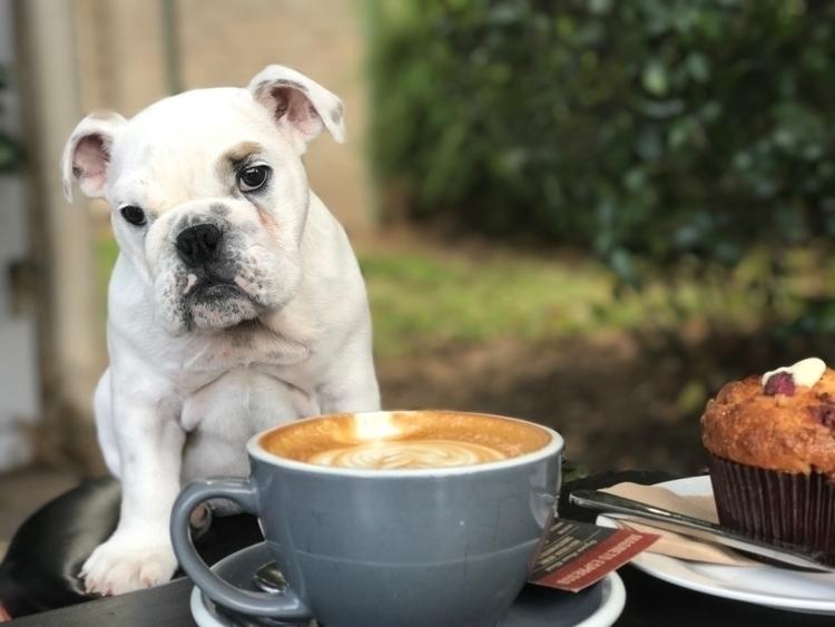 enjoy cup coffee :coffee:️ - cafe - royalbulli3z | ello