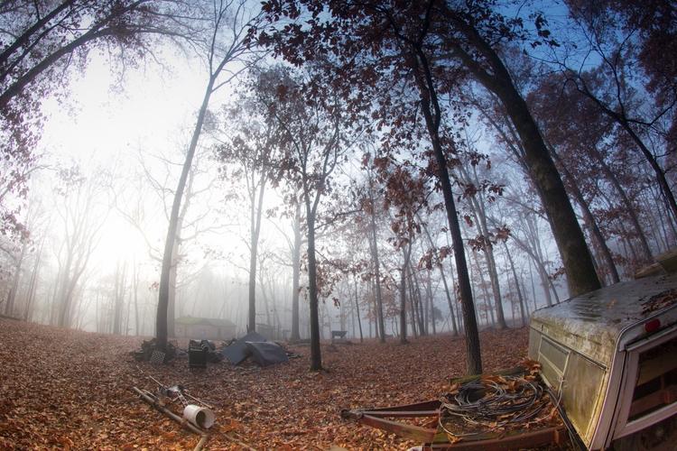 fog, woods, fineartphotography - kittypawpie | ello