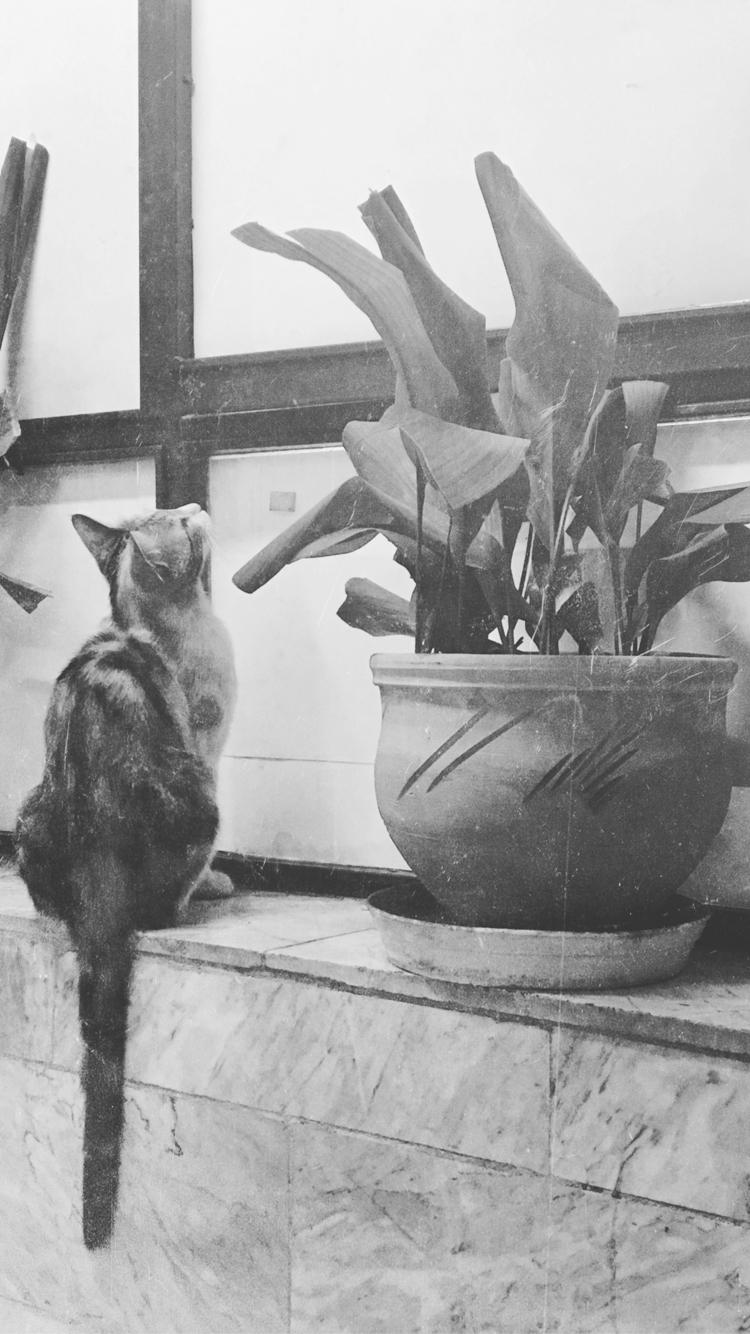 cat, photography - niyousha | ello