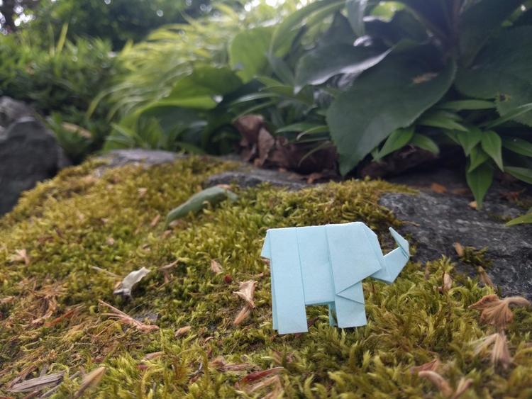elephantorigami Post 30 Jun 2017 17:15:11 UTC | ello