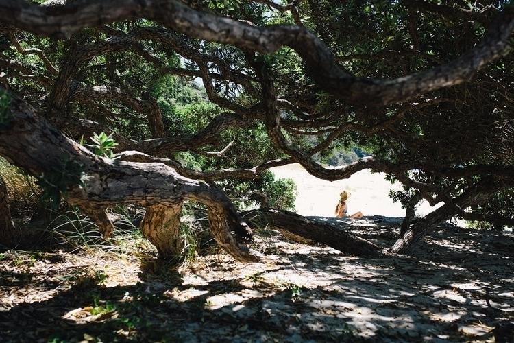 Finding holes trees - jesslowcher | ello