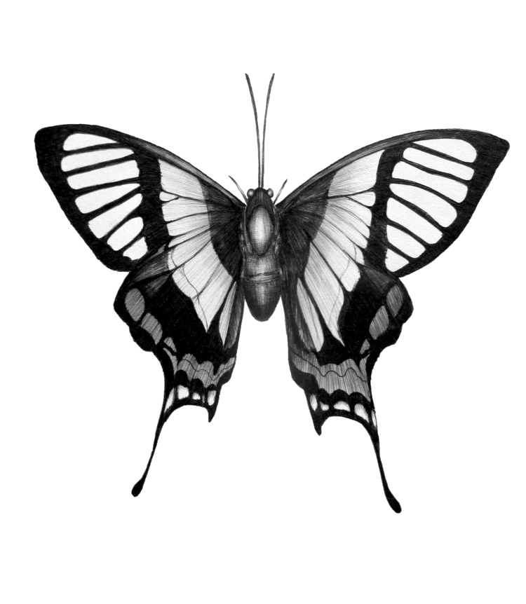 Butterfly Wings. Ballpoint Pen - ecmazurart | ello