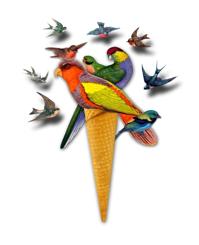:bird:Birds learn fly, knowing  - gloriasanchez | ello