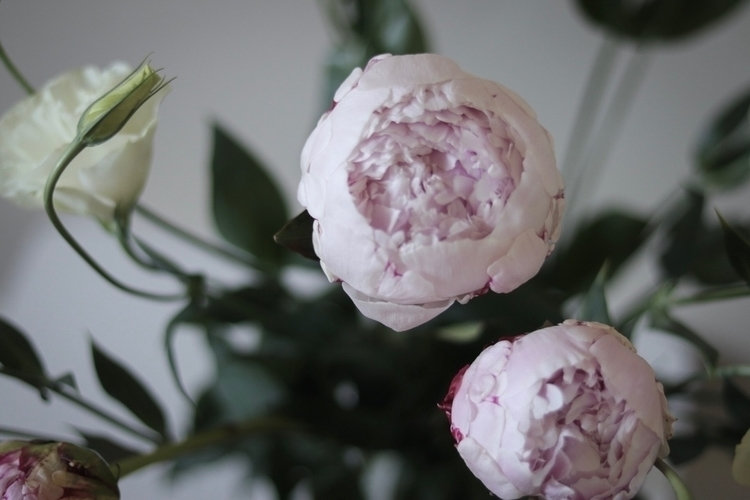 Beautiful peonies home - flower - willowstyleco | ello