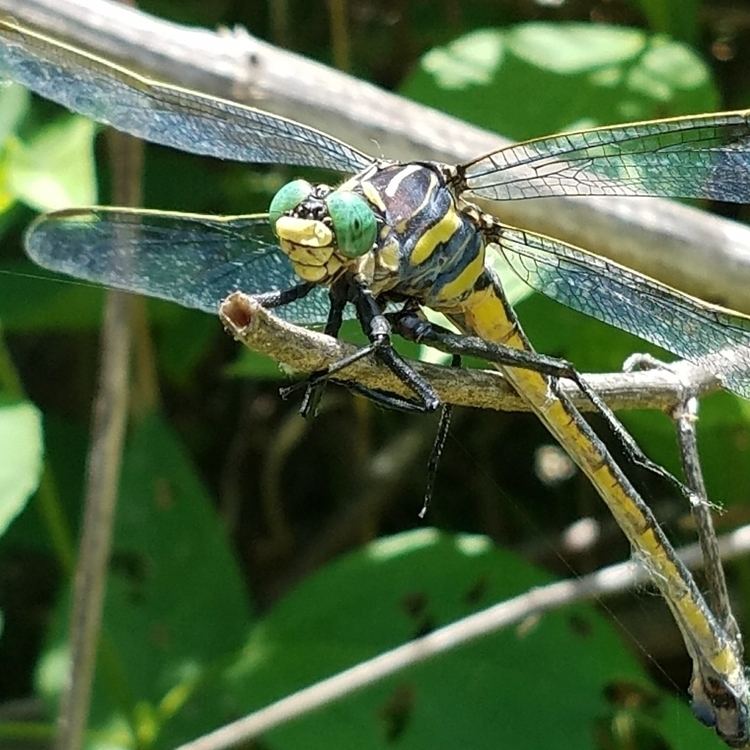 guess insects dragon flies larg - newdeathdisco   ello
