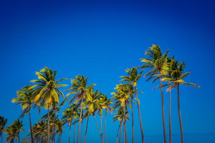Modicum measure | [Ello](http - coconut - photografia | ello