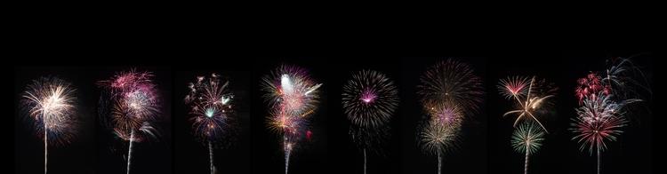 Firework Flowers - kellydelay | ello