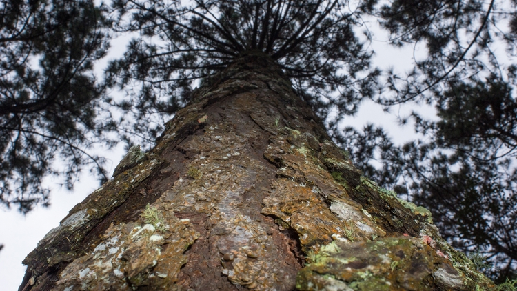 photography, photo, tree, sfx - renato_david | ello