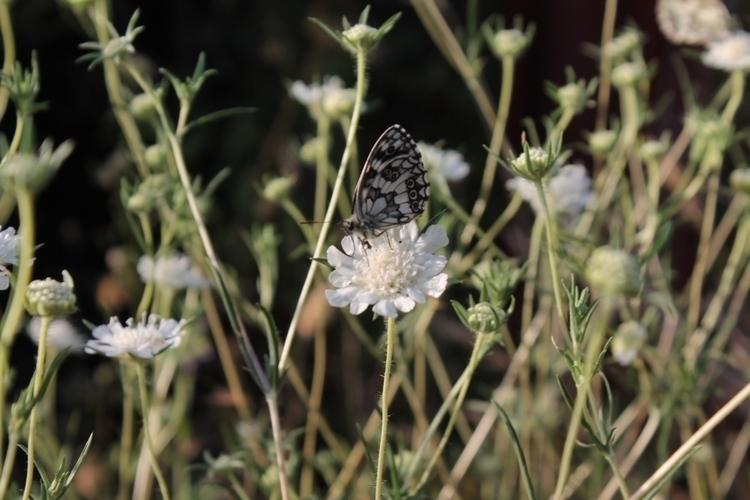 nature, butterfly, flowers - alexander_stiv | ello