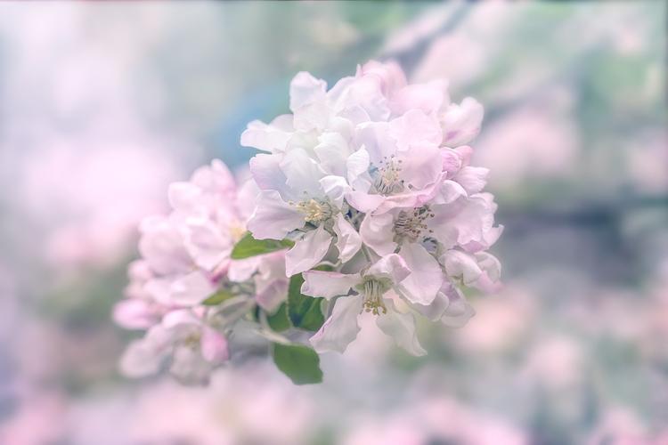 Spring flowers - actyon | ello