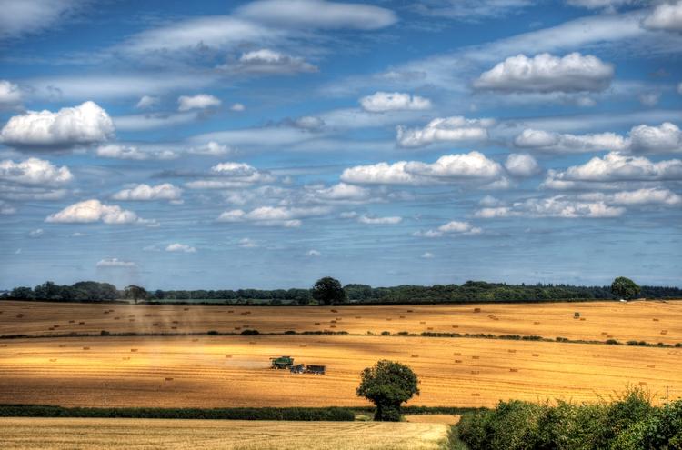 Harvest! harvest wheat started  - neilhoward | ello