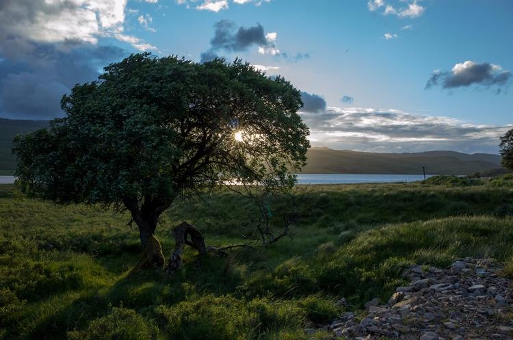 Tongue, Highlands - kristina_88 | ello
