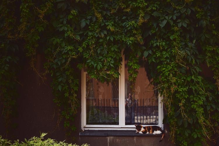 Purrfect monday - streetphotography - bartekbuzuk | ello
