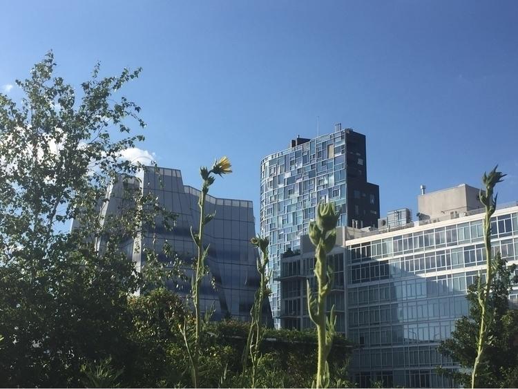 High Line - thevanpirechronicles | ello