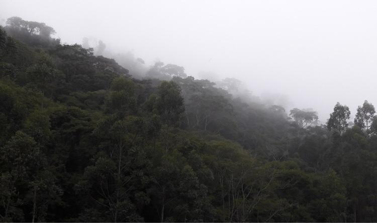 forest, cold - luizcalvi | ello