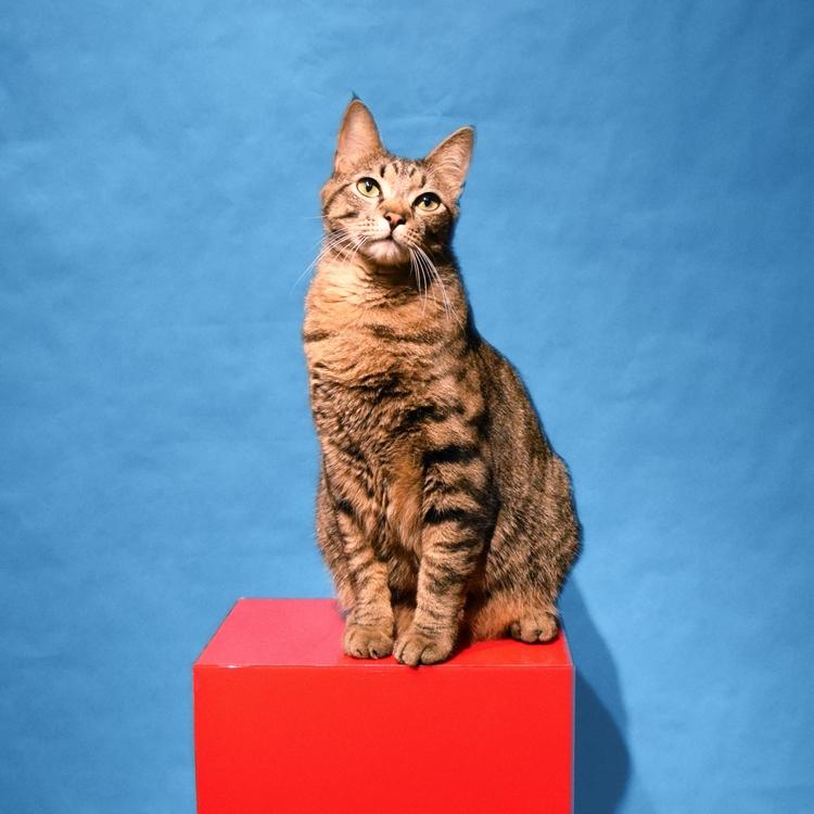 Mojo Photography - mojo, cat, mojothecat - jahnyawn | ello