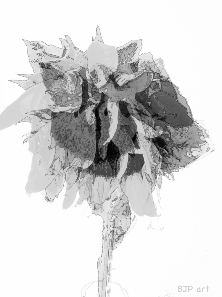 Sonnenblume  - BJP_art, Lichtspurkomposition - bringfried | ello