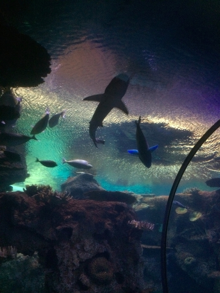 Feeling restless shark tank. br - vivianmcinerny | ello