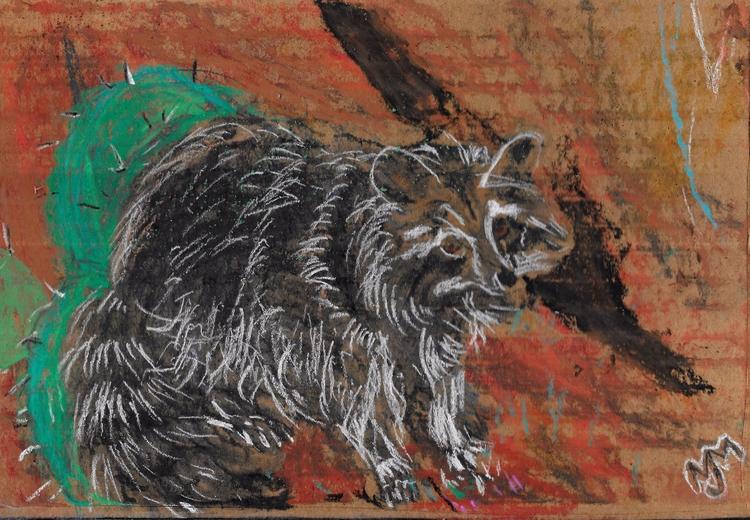 Hill-country Raccoon, Pastel ,8 - clan_morrison_art   ello