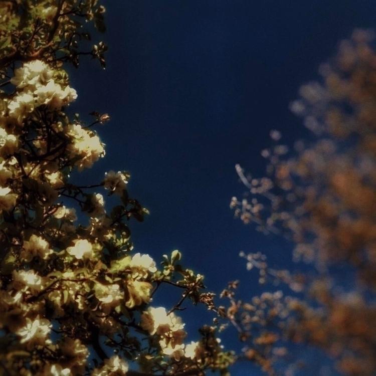 SPRING CHERRY TREES Pablo Nerud - pascalbernheim | ello