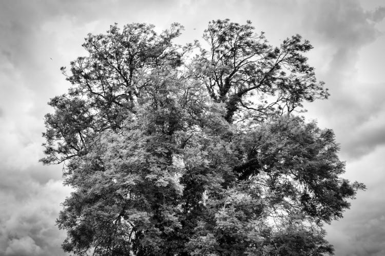 photo trees: Trees - 4, photography - davidhawkinsweeks | ello