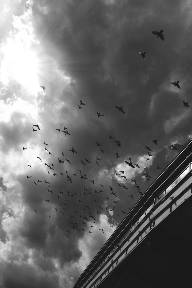 City birds - photography, Berlin - cm1ele | ello