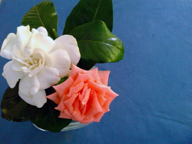 Writing beauties today - flowers - valentinacano | ello