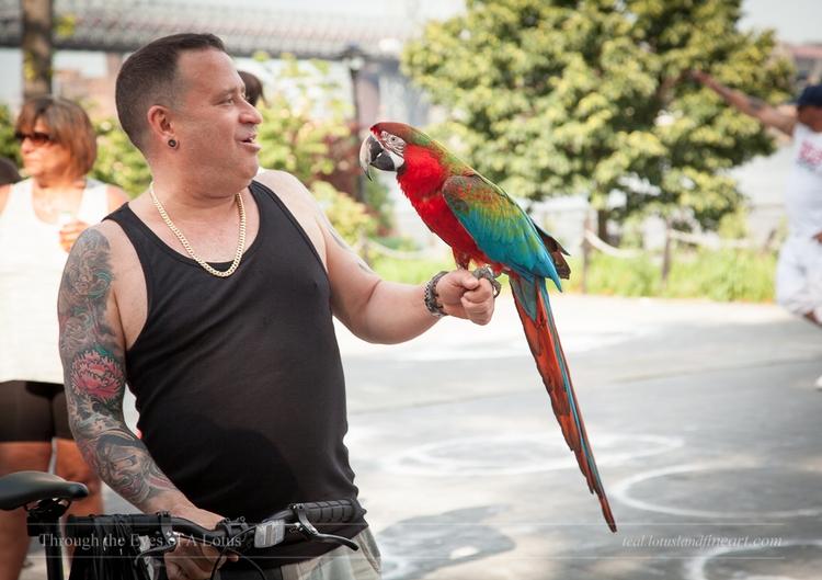 Feathered Househead. bird enjoy - wlotus | ello