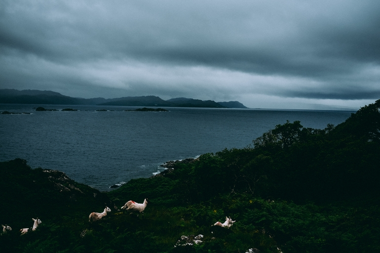 rainy days exploring Scottish C - lavisuals   ello