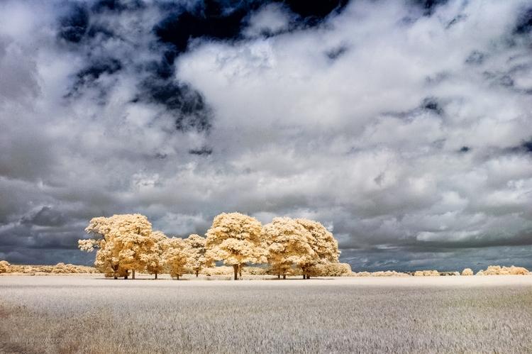 IR shot - Hokey Cokey trees', c - toni_ertl | ello