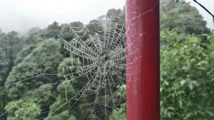 Mist Catcher - spidersweb, nofilter - storyteller_eddy | ello