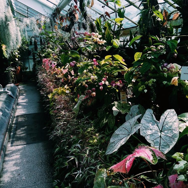 BOTANICALGARDEN, PLANTS, EXOTICPLANTS - sselepohmi | ello