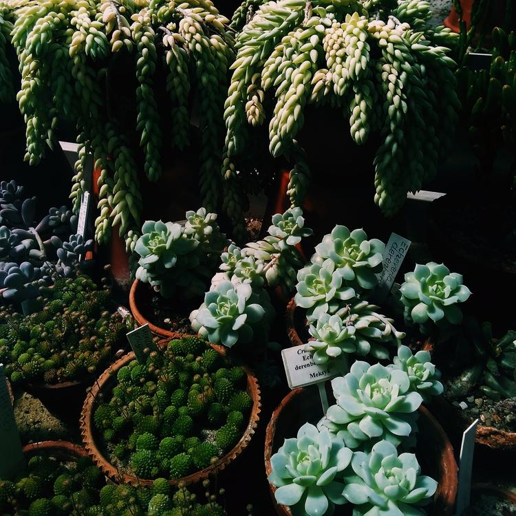 PLANTS, MEXICAN, BOTANICALGARDEN - sselepohmi | ello
