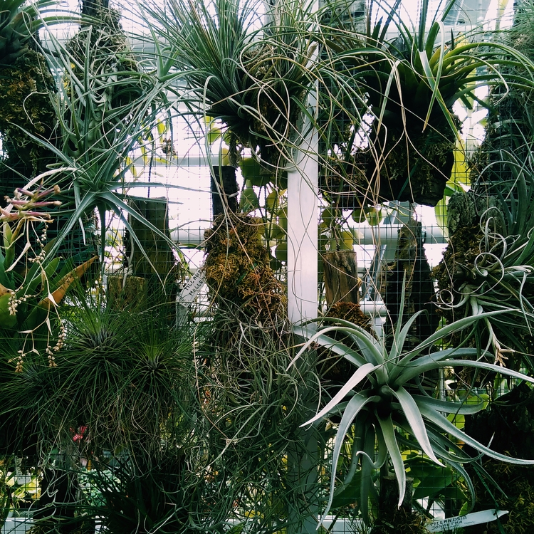 ALOEVERA, PLANTS, BOTANICALGARDEN - sselepohmi | ello