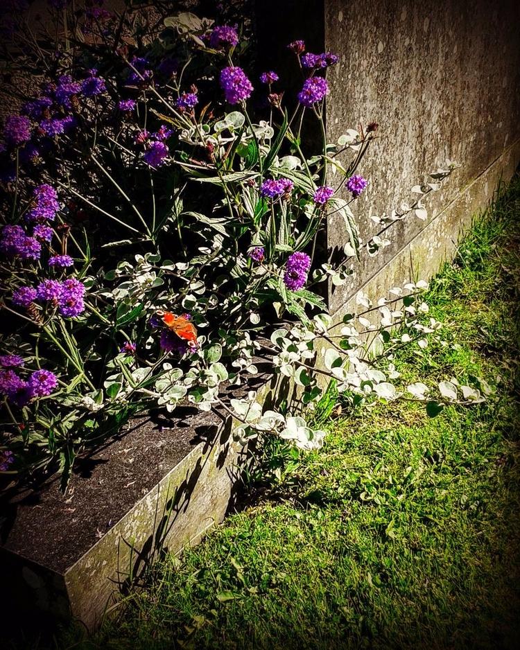 Fjärilar bland gravvårdarnas bl - skogskyrkogardar   ello