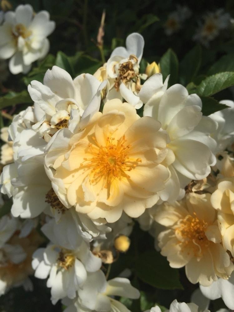 Honeyrose - hexica | ello