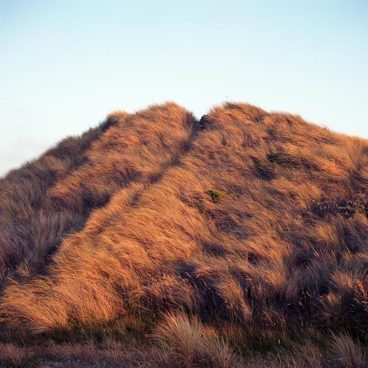 Golden Kodak Ektar 100 Mamiya 6 - biosfear   ello
