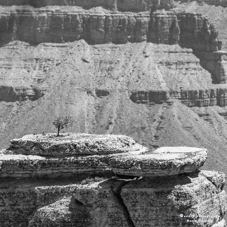 Easy Life, Grand Canyon million - azdrk | ello