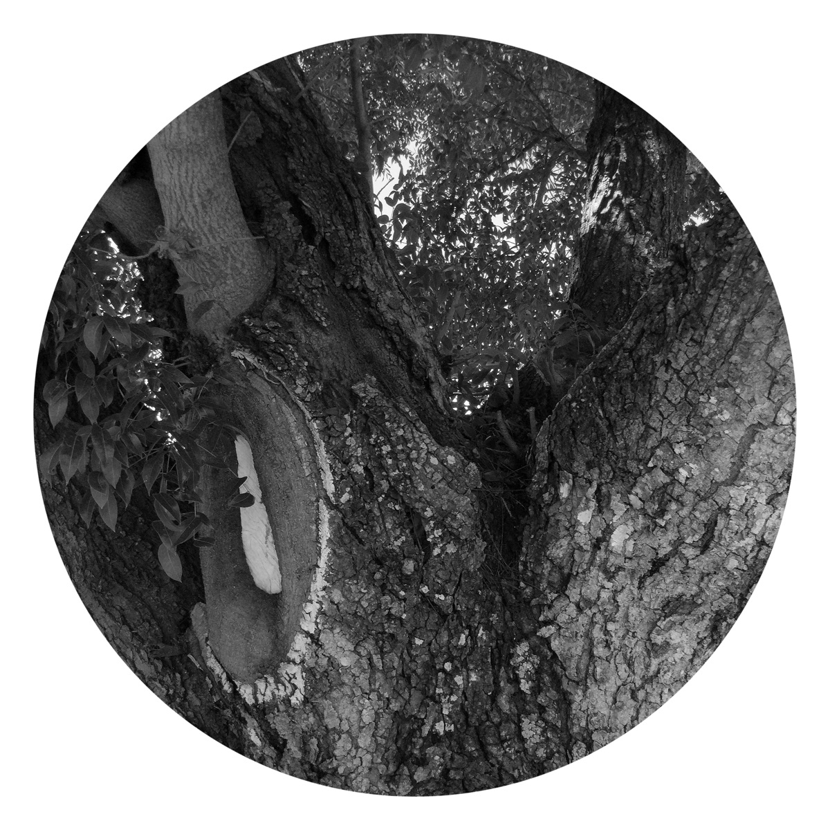 Tree Trunk Backyard Apps - mikefl99 - mikefl99 | ello