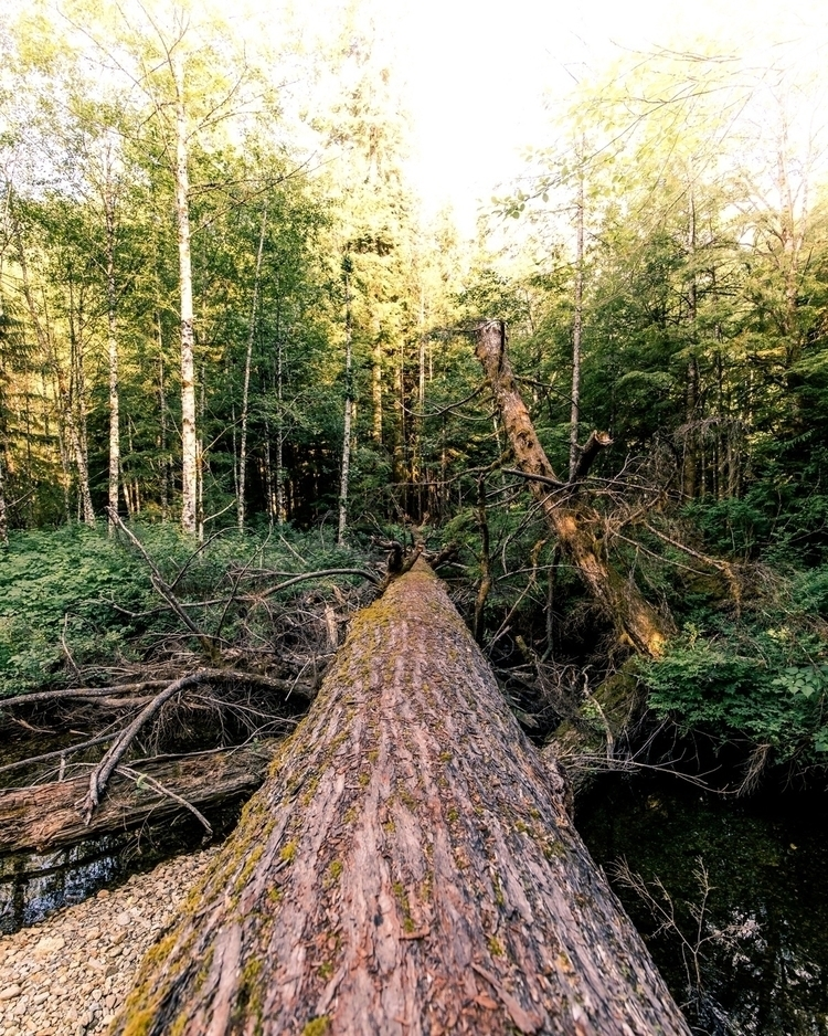 largest windfall trees complete - trevorwert | ello