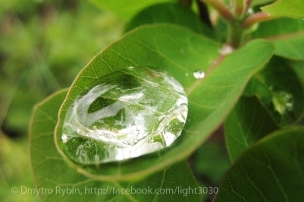 Water drop. Art Photography - pictorialphoto - dmytroua | ello