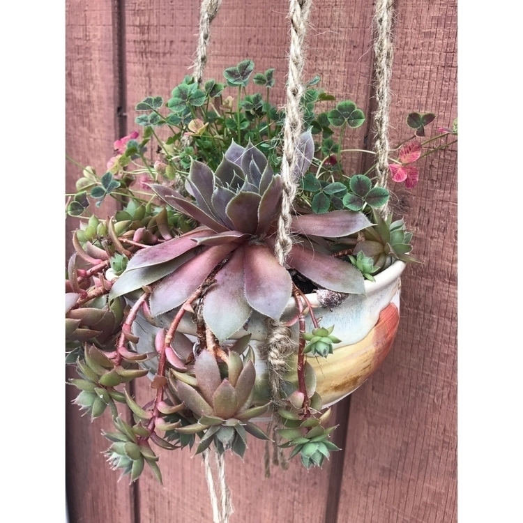 succulent grown sun short weeks - muddynature_pottery | ello