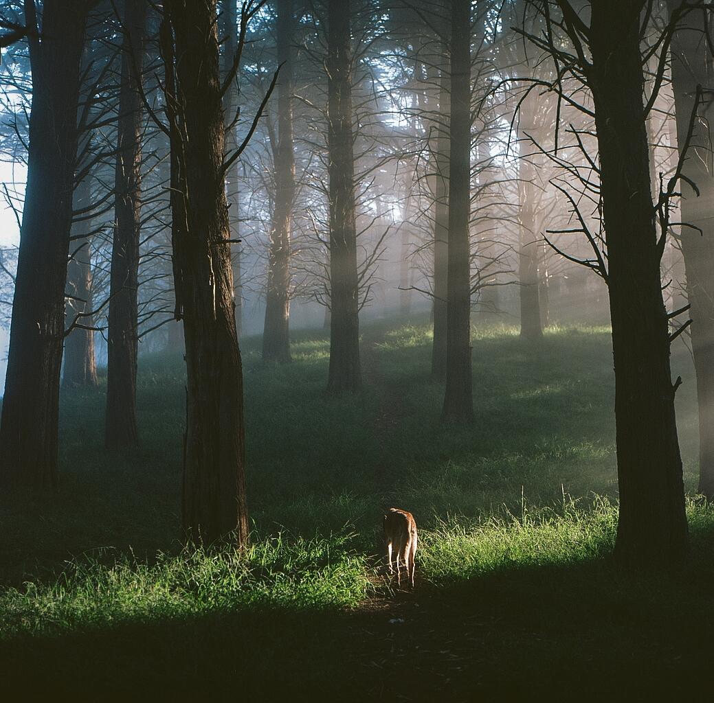 Das Herz ist ein dunkler Wald - ellofilm - teetonka | ello