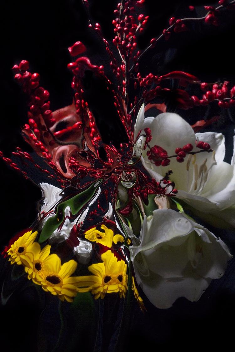 Floral /003  - photography, incamera - davyevans | ello