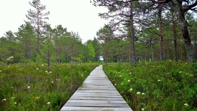 Tihu Nature Reserve, Hiiumaa (2 - norre01 | ello